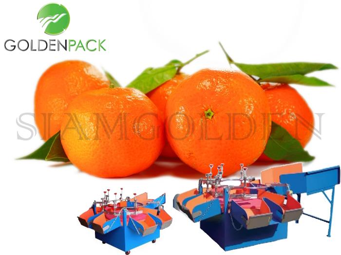 เครื่องคัดส้ม เครื่องคัดผลไม้