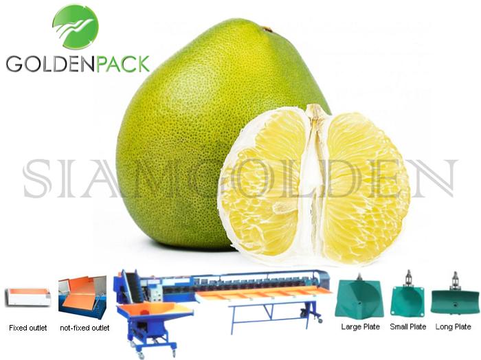 เครื่องคัดส้มโอ เครื่องคัดผลไม้